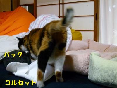 12aq1.jpg