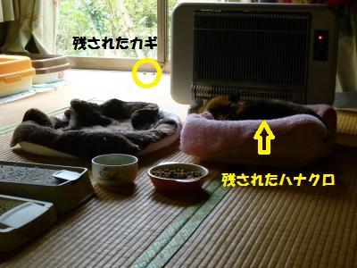 12kr8.jpg