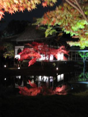 高台寺 紅葉 ライトアップ