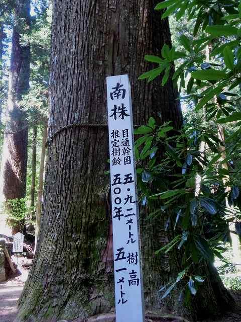 横倉山6大杉