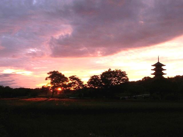 夕陽が赤米を照らす一瞬