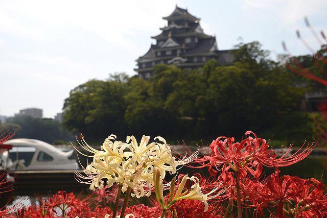 お城と彼岸花4