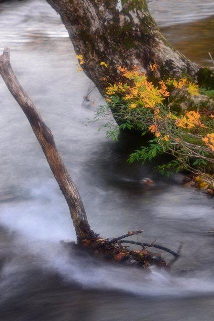 園内を流れる小川2