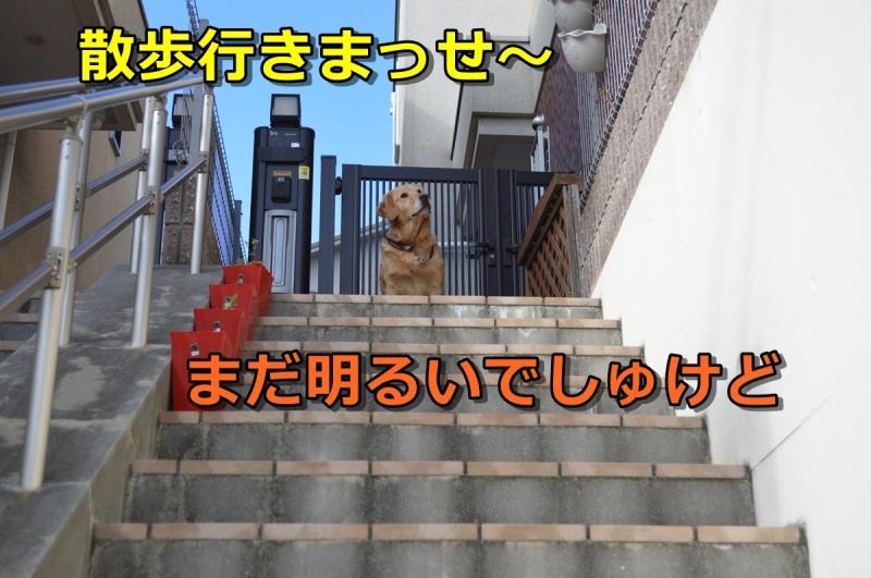 DSC_1848-001.jpg