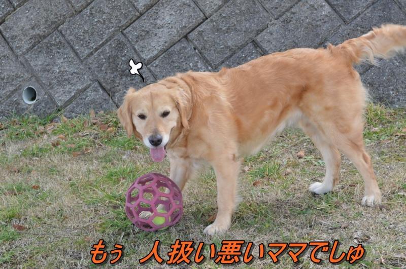 DSC_2241.jpg