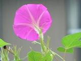 004_20120824022120.jpg