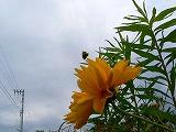 011_20120606065051.jpg