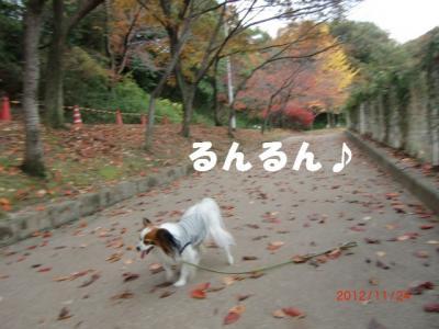 010_convert_20121205223434.jpg