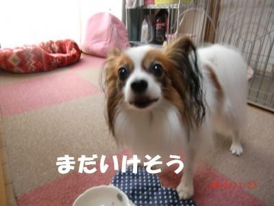 012_convert_20121123174157.jpg