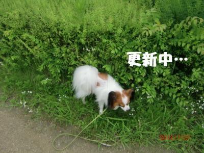 033_convert_20120722214044.jpg