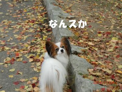 034_convert_20121205222051.jpg