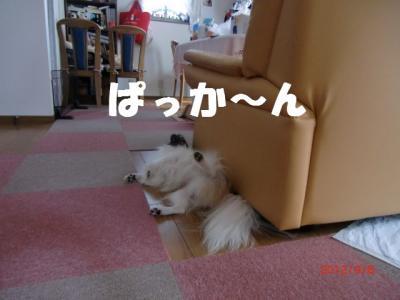 065_convert_20120919133528.jpg