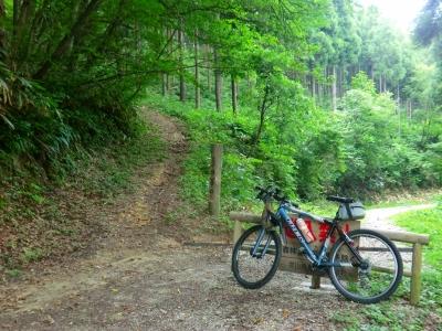 山川の林道に出る
