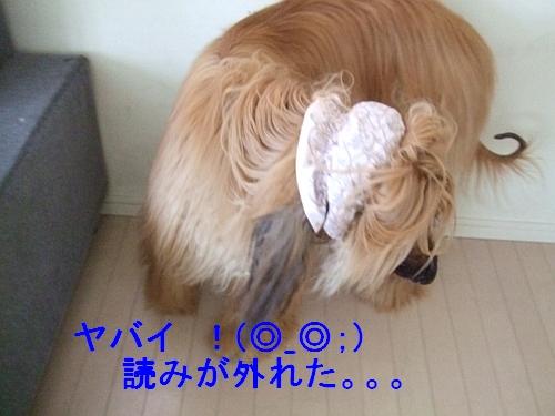 PO20120526_0004.jpg