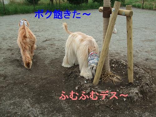 PO20120625_0008.jpg