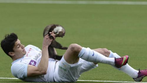 【動画あり】スイスリーグの試合中にテンがピッチに乱入!DFを手玉に取る