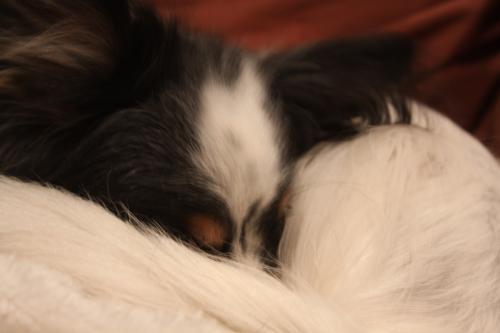 寝るイチロー