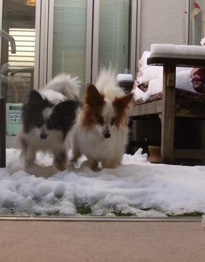 イチキなと雪