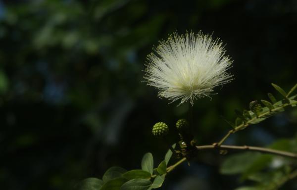温室・ナムの花