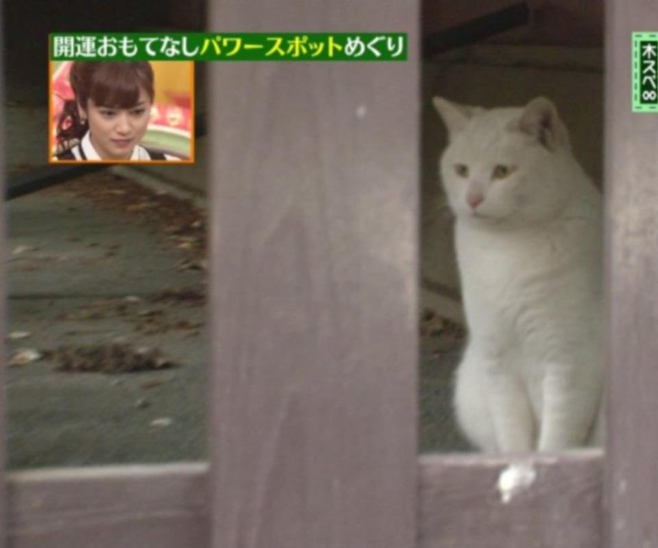 パワースポットの幸運な白猫