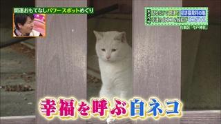 物凄い珍しい白猫