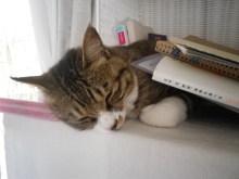 さなとりぅむ-本になりたかった猫2
