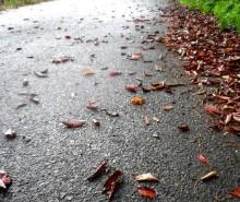 さなとりぅむ-夏の秋の道