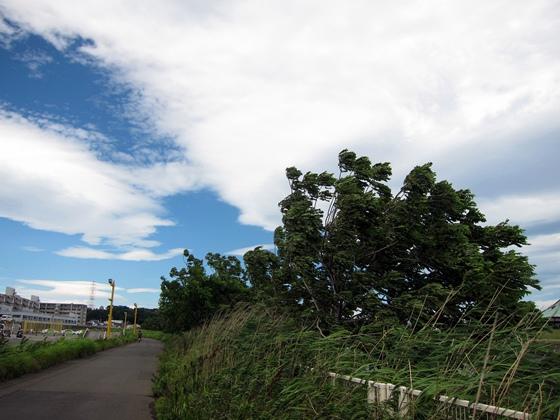 台風一過07