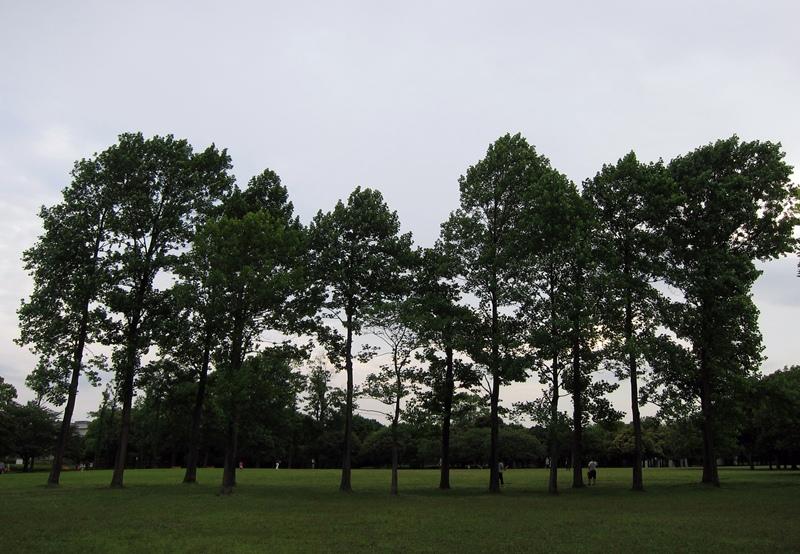 岸根公園03