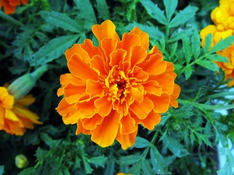 墨田公園の花2
