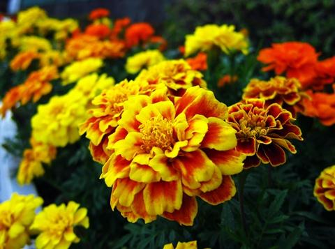 墨田公園の花3