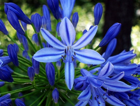 墨田公園の花1