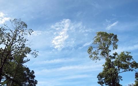 木の間の空