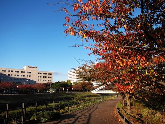 1121鶴見川の秋12