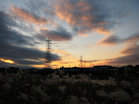 1121鶴見川の秋16