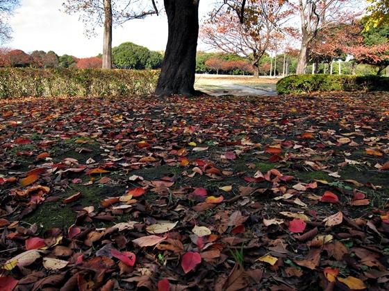 1124岸根公園の秋06