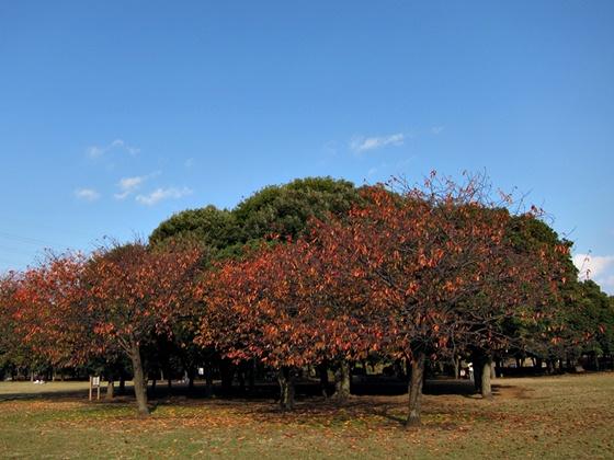1124岸根公園の秋13