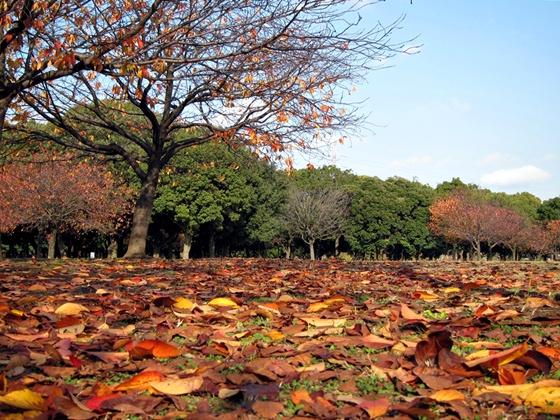 1124岸根公園の秋11