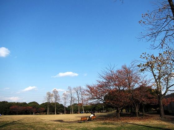 1124岸根公園の秋09