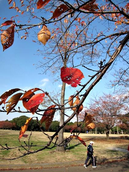 1124岸根公園の秋08