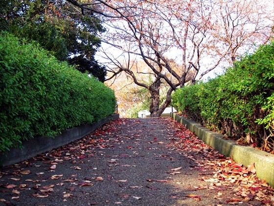 1124岸根公園の秋15