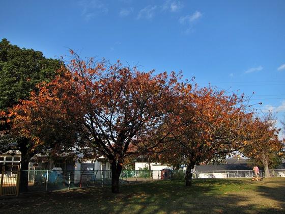 1124岸根公園の秋16