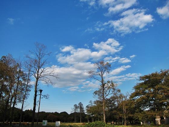 11の秋の青空01