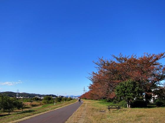 11の秋の青空12