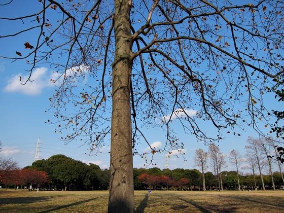11の秋の青空18