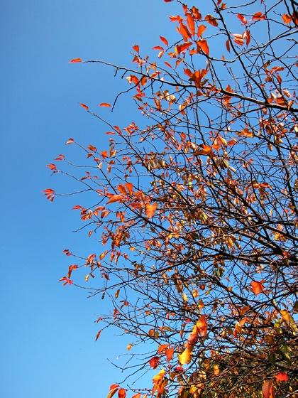 11の秋の青空20