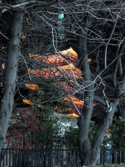浅草夜景13