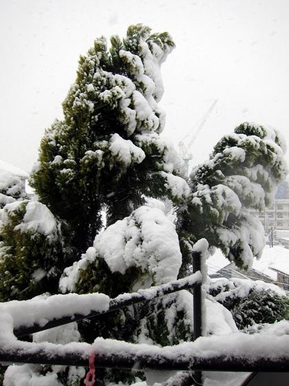 0114大雪003
