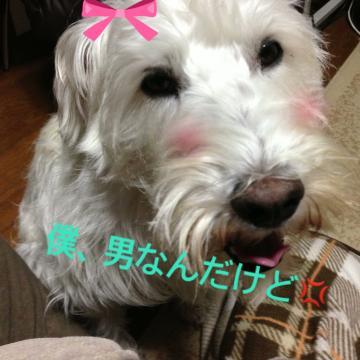 蜀咏悄_convert_20121203223534