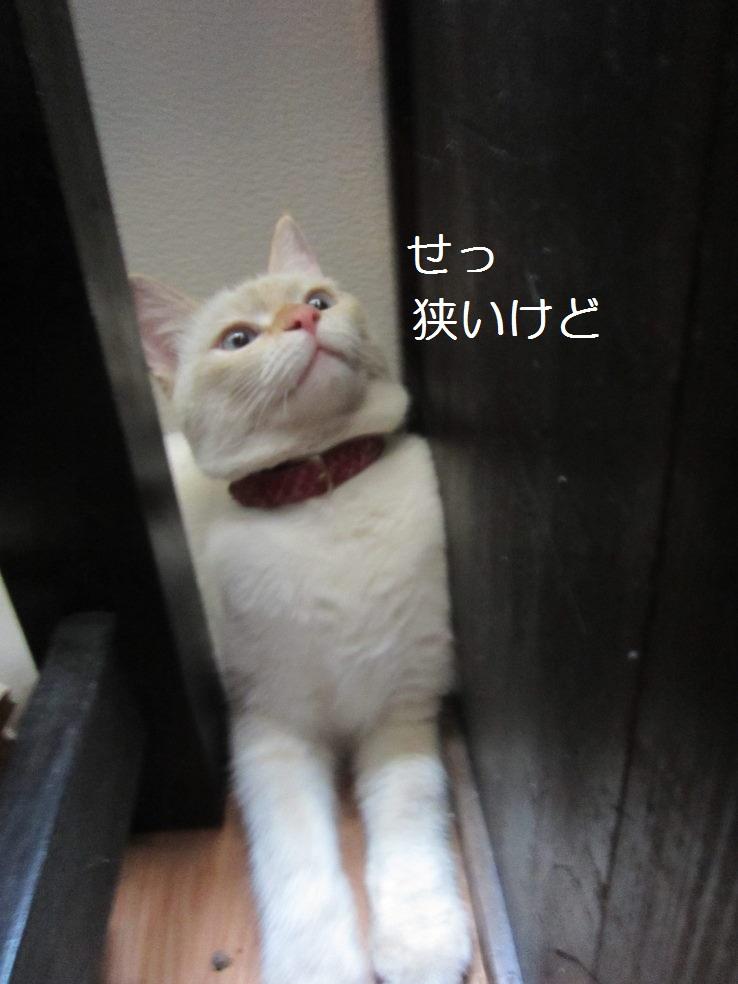 うIMG_4594